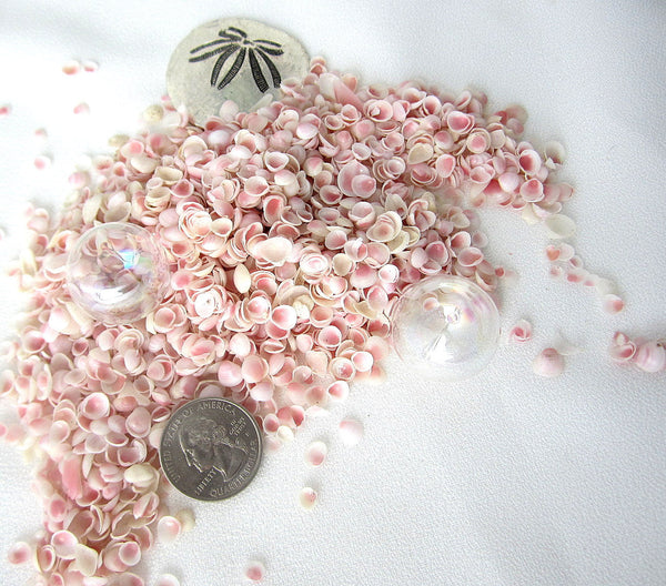 apple blossom shells, apple blossom seashells, tiny pink shells, tiny pink seashells, beach wedding shells, blush wedding shells
