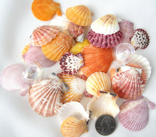 beach wedding shells, scallop shells, scallop seashells, scallops, jewelry shells, craft shells