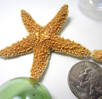 brown sugar starfish, sugar starfish, sugar star fish, small starfish, beach wedding starfish, orange starfish