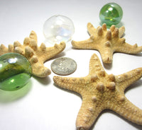 brown knobby starfish, brown knobby star fish, brown starfish, small brown starfish, bumpy starfish, bumpy star fish