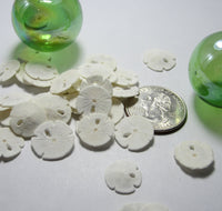 small sand dollars, tiny sand dollars, medium sand dollars, bulk sand dollars, craft sand dollars, jewelry sand dollars