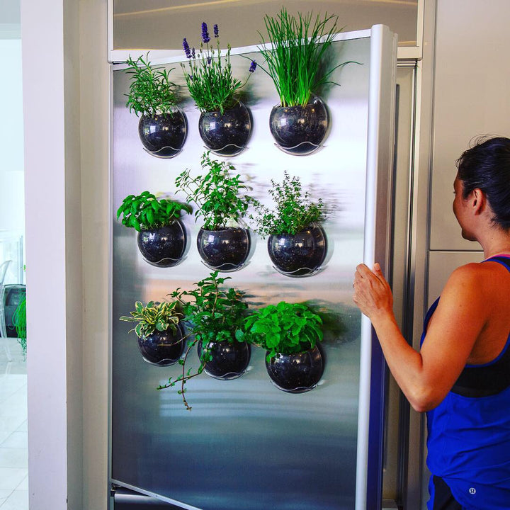 Grow kitchen herbs using Urbz planters which attach to windows, tile or any smooth surface. These ingenious window planters display houseplants, succulents and herbs as a movable vertical garden. Declutter the sill and grow on your windows instead.