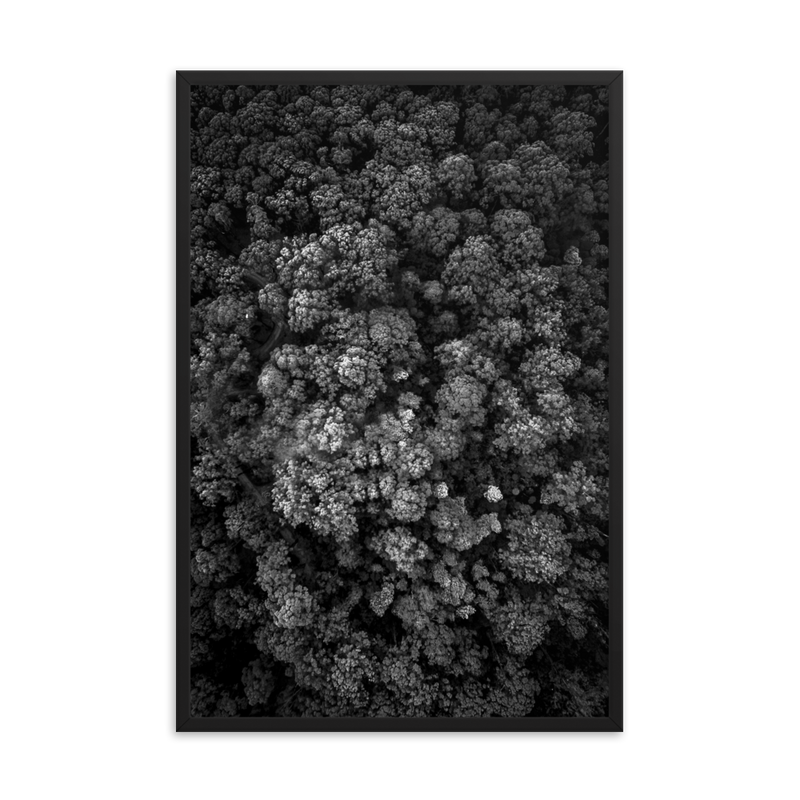 Black and White Broccoli Trees Print