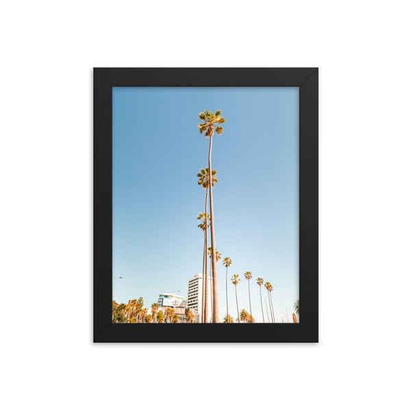 Palm Trees Framed poster