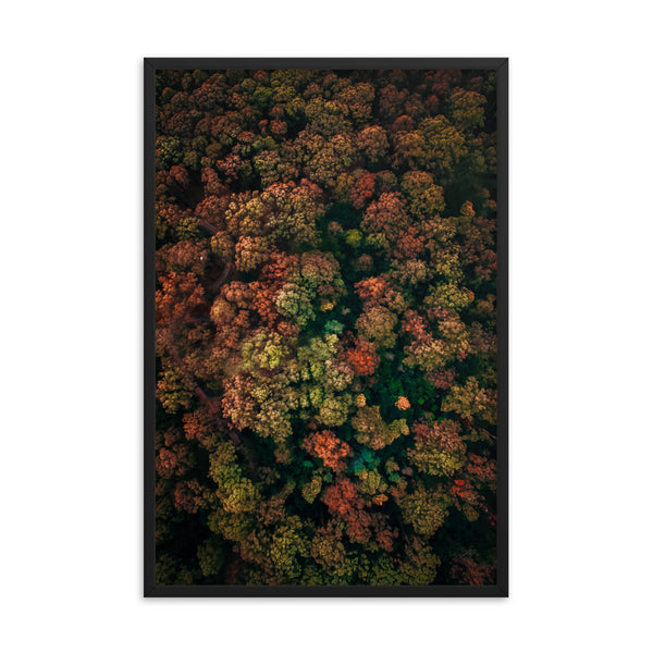 Brocolli Trees Print