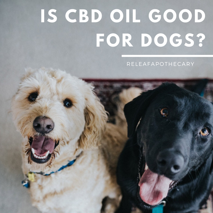 IS CBD OIL GOOD FOR DOGS?