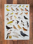 A5 British Garden Birds Identification Card