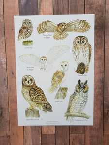 A5 Owl Identification Card
