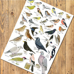 A3 Bird Identification Poster