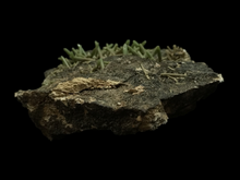 Load image into Gallery viewer, Pyromorphite; Daoping Mine, Guangxi Province, China - Alexandria Mineral Shop