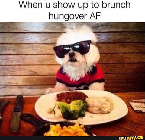 dog with glasses eating brunch hangover meme