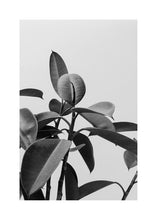 Dark contrast plant black and white
