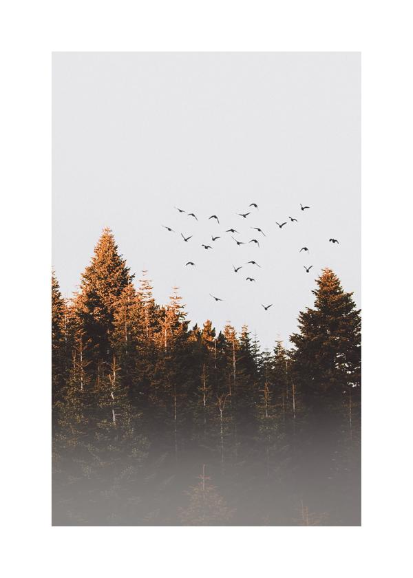 Birds above the forest