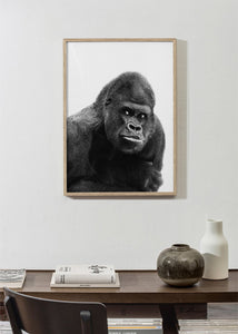 Afraid gorilla