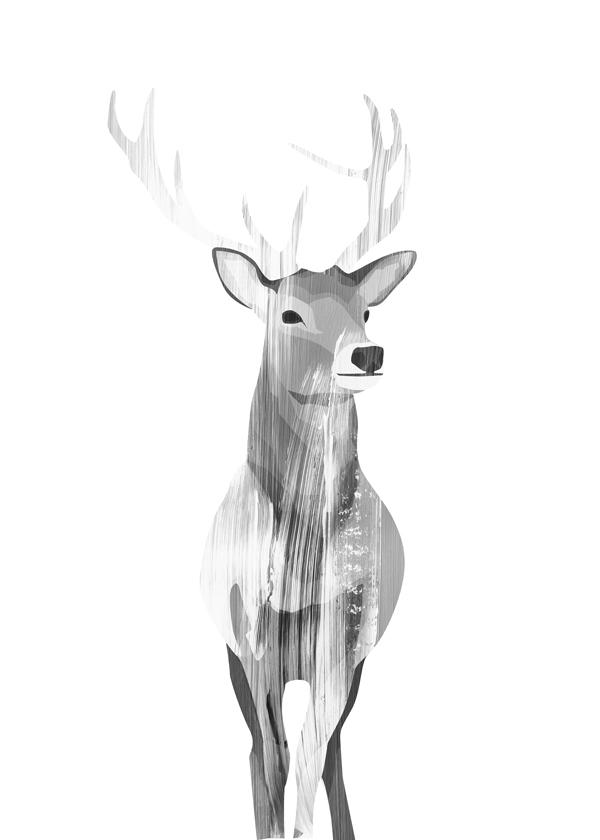 Deer (Black and white)
