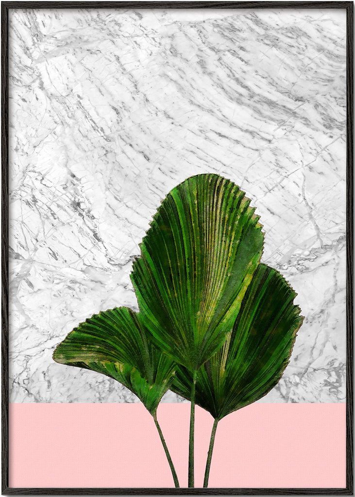 Palm plant on marble and pink wall