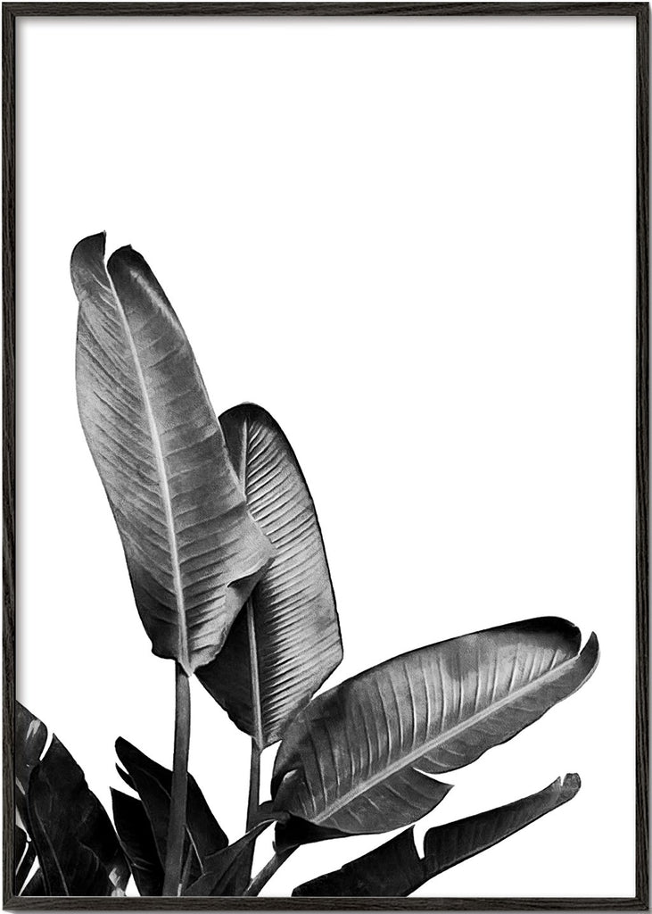 Bird of Paradise Plant Black and White 03
