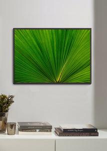 Fan Palm Leaves 02