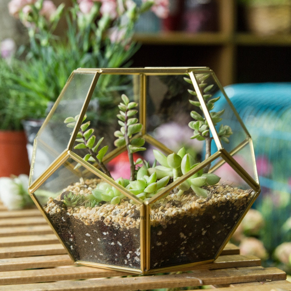 Geometric 12 Sided Glass Terrarium - 3 Colors
