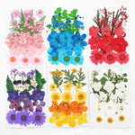 Pressed Collection of Natural Dried Flowers - 11 Colors