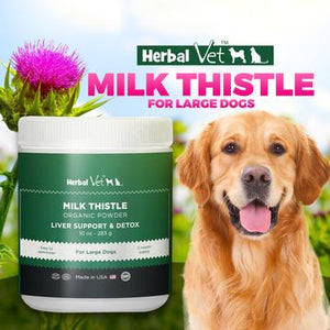 The Best Organic Milk Thistle Powder For Dogs