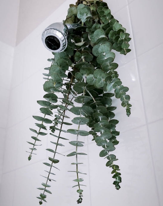 Eucalyptus Bath Bouquet