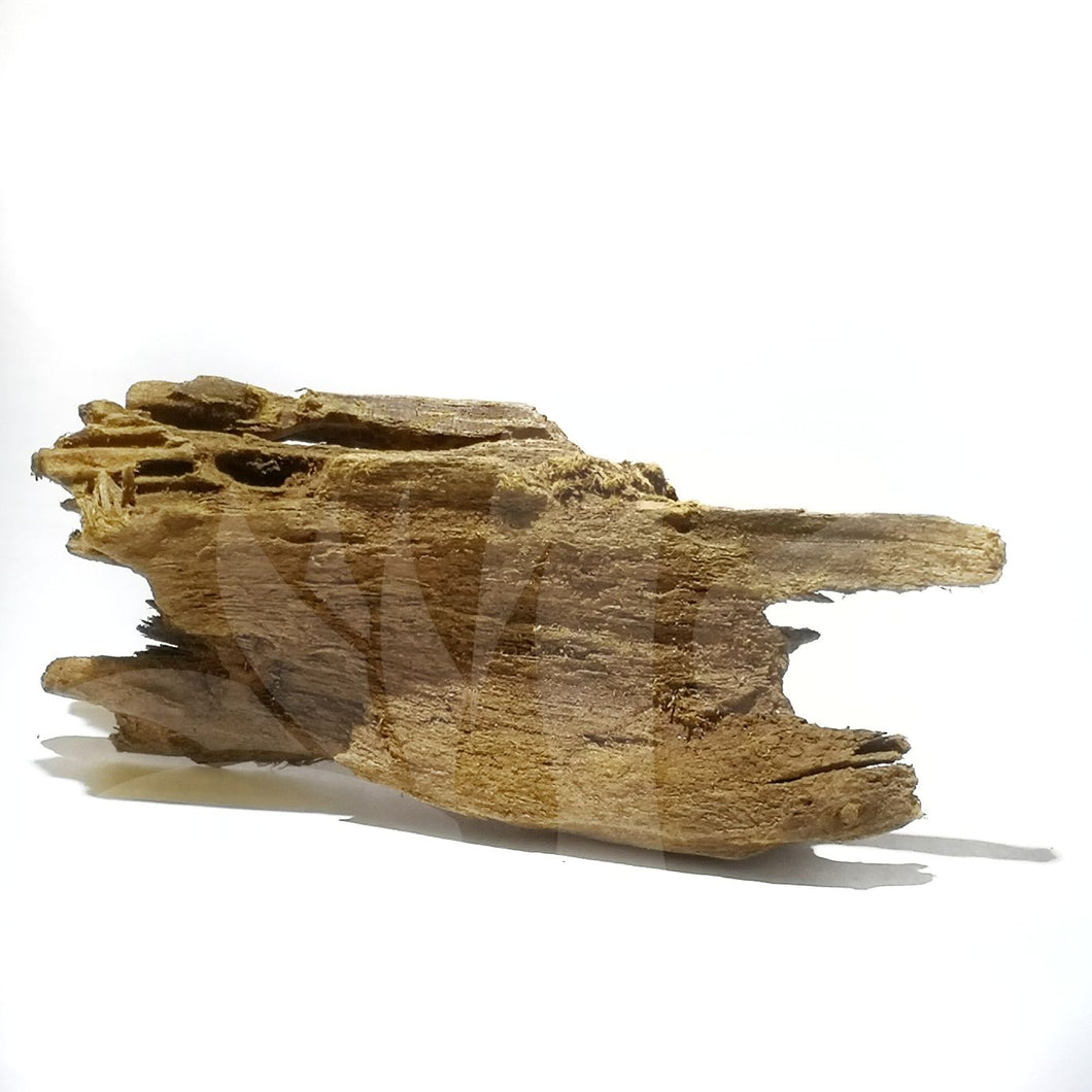 Small beautiful driftwood
