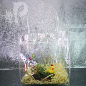 Christmas Airplant Tillandsia Decor