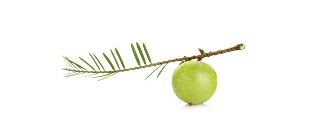 Amla Fruit is a key ingredient in Herbaland Collagen Booster
