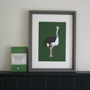 Ostrich framed print with green background