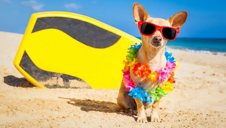Do Dogs Need Vacations, Too?