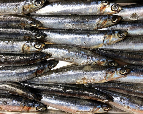 What are anchovies?
