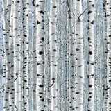 Timberland Trail Birch Trees on Blue