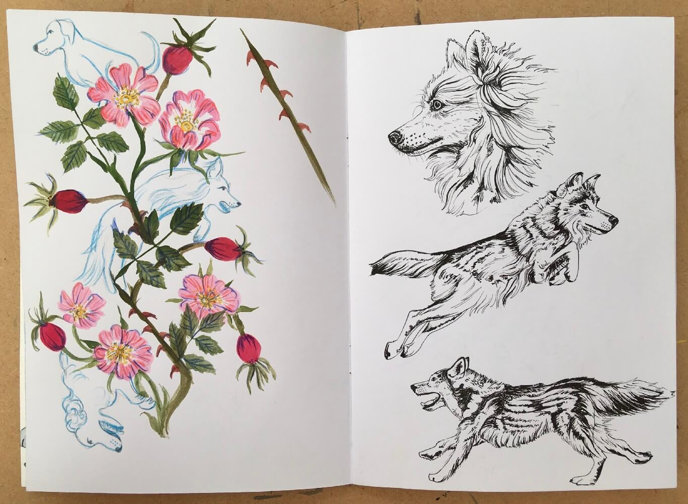 Detailed sketches with the dog rose