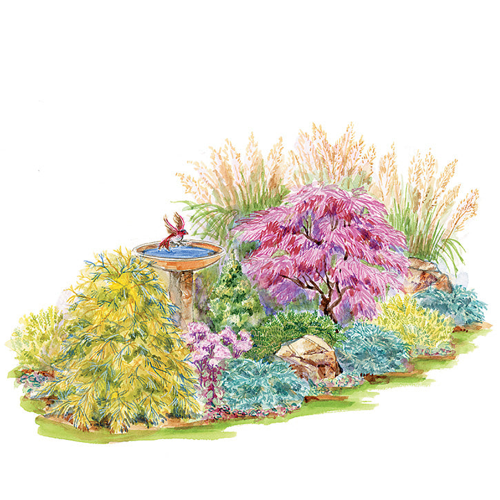 Color & Texture Garden Plan