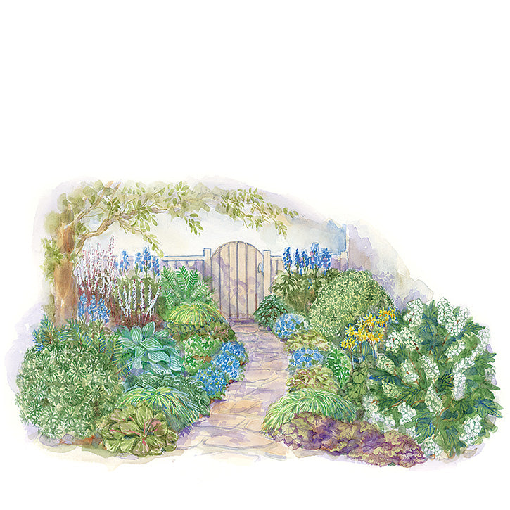 Hummingbird Garden Plan