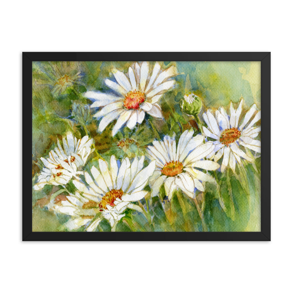 Shasta Daisy Illustration Framed Print