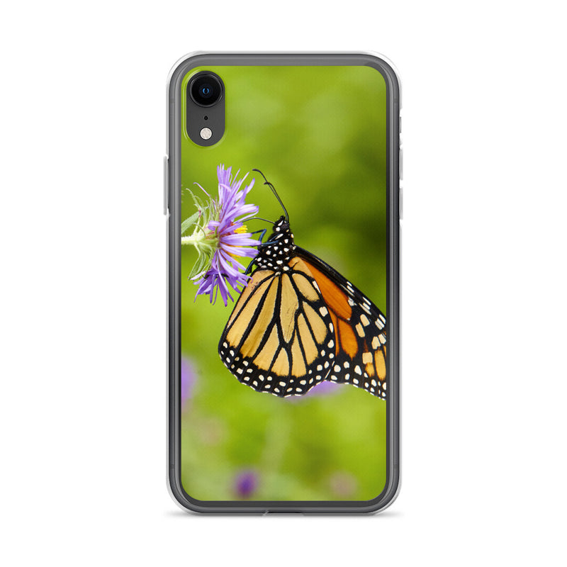 Monarch on Aster iPhone Case