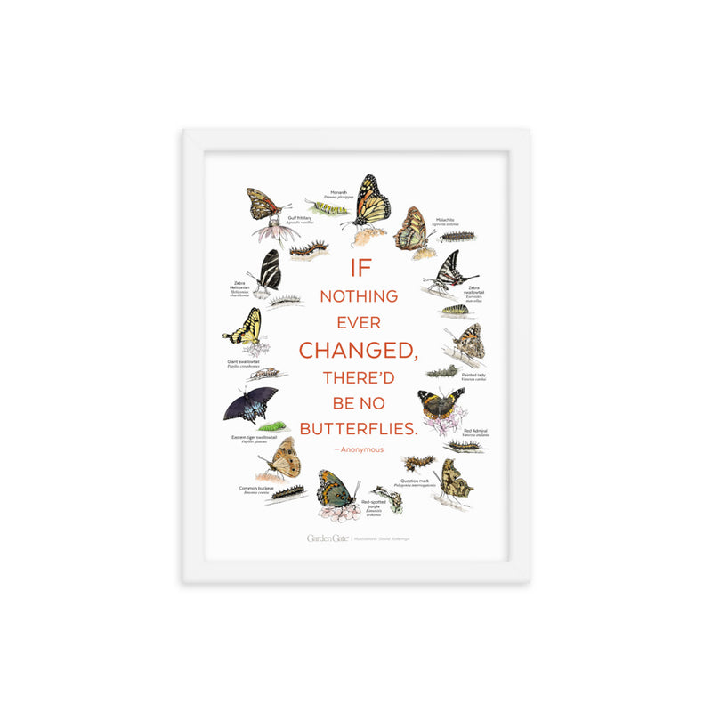 Butterflies — Illustrated Print (Framed)