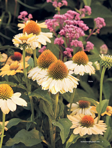 108+ Perfect Perennials & Must-Have Plants