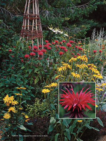 Ultimate Perennials for Sun & Shade