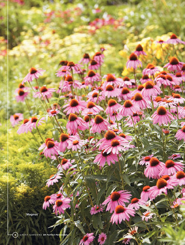 89 Perfect Perennials