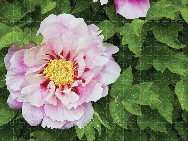 Pink Peony Jigsaw Puzzle