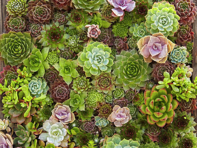 Succulents Tapestry Jigsaw Puzzle
