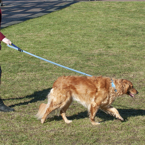Easy-Tether Reflective Bungee Dog Leash