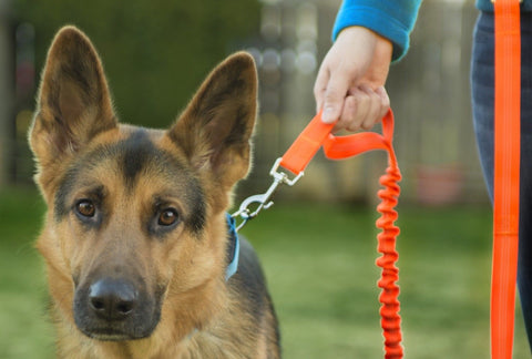 FurHaven Hands-Free Bungee Dog Leash