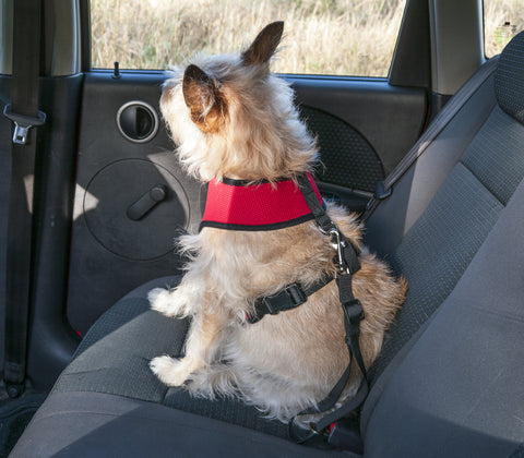 Pet Car Seat Clip