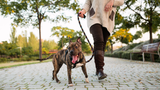Loose Leash Walking Online Course