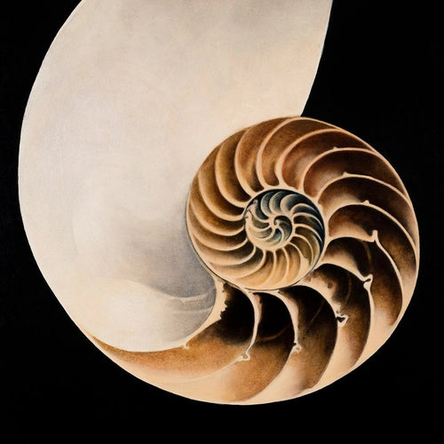 Nautilus by Barbara Hangan, Oil on Panel, Vintage Frame Restored