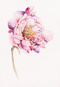 """Magnolia"" By Media Jamshidi, Watercolor On Paper"